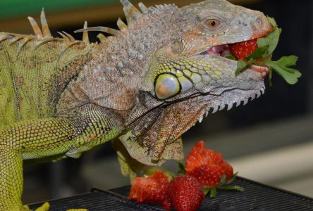 Le zoo des reptiles est de retour au Cégep