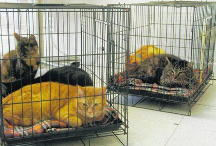Une solution à la surpopulation animale