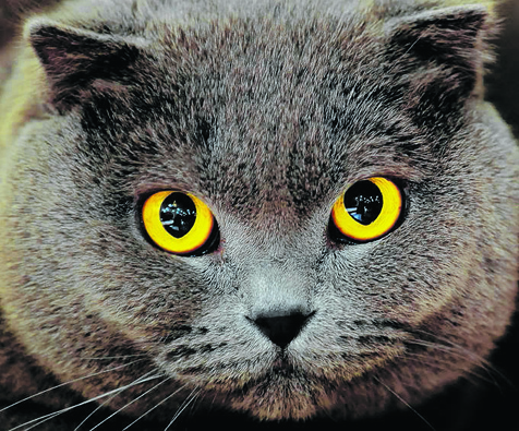 Quelques maladies courantes des yeux