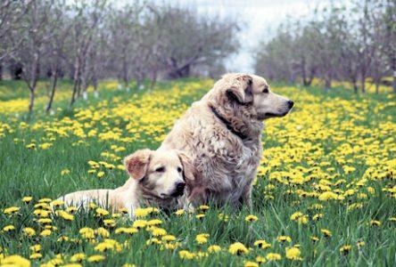 D'autres produits susceptibles d'empoisonner votre chien