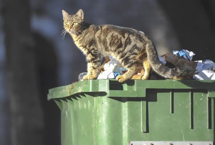 Chats errants: une vraie épidémie
