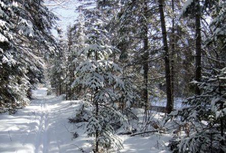 Neige, chevreuils et ski de fond à Duhamel