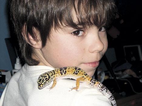 Quelques conseils avant d'accueillir un gecko