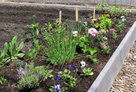 Rencontres sur le démarrage de jardins communautaires