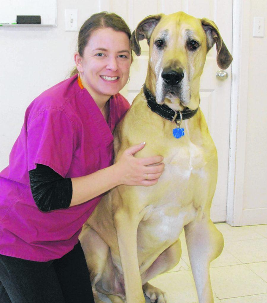 Une tumeur bénigne fréquente chez le chien