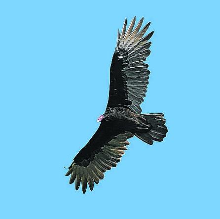 Observation des oiseaux datant du site