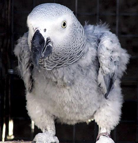 Votre oiseau s'arrache-t-il les plumes?