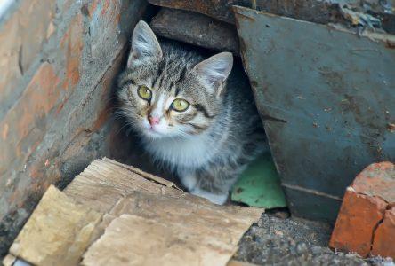 Enfin un refuge pour animaux à Saint-Jean