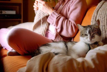 Saint-Jean serre la vis aux propriétaires d'animaux