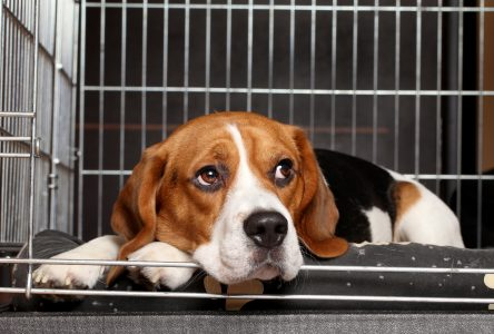 Le refuge pour animaux ne sera pas prêt pour janvier