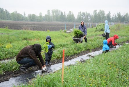 La Ville recherche des bénévoles pour la plantation de 6000 arbres