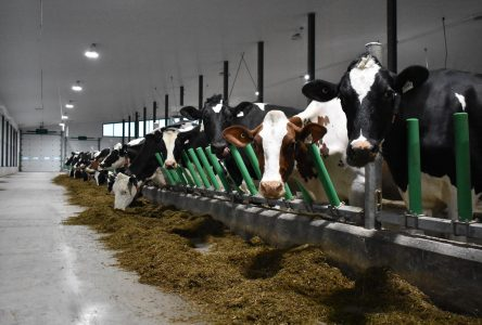 Un projet pilote pour les producteurs laitiers