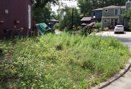 Potagers et végétation naturelle en façade: le conseil municipal ouvert à revoir la réglementation sur l'entretien des terrains