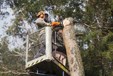 Mesures de sécurité avant l'abattage d'un arbre