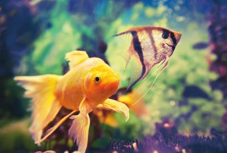 Acheter un aquarium à Québec : quoi savoir?