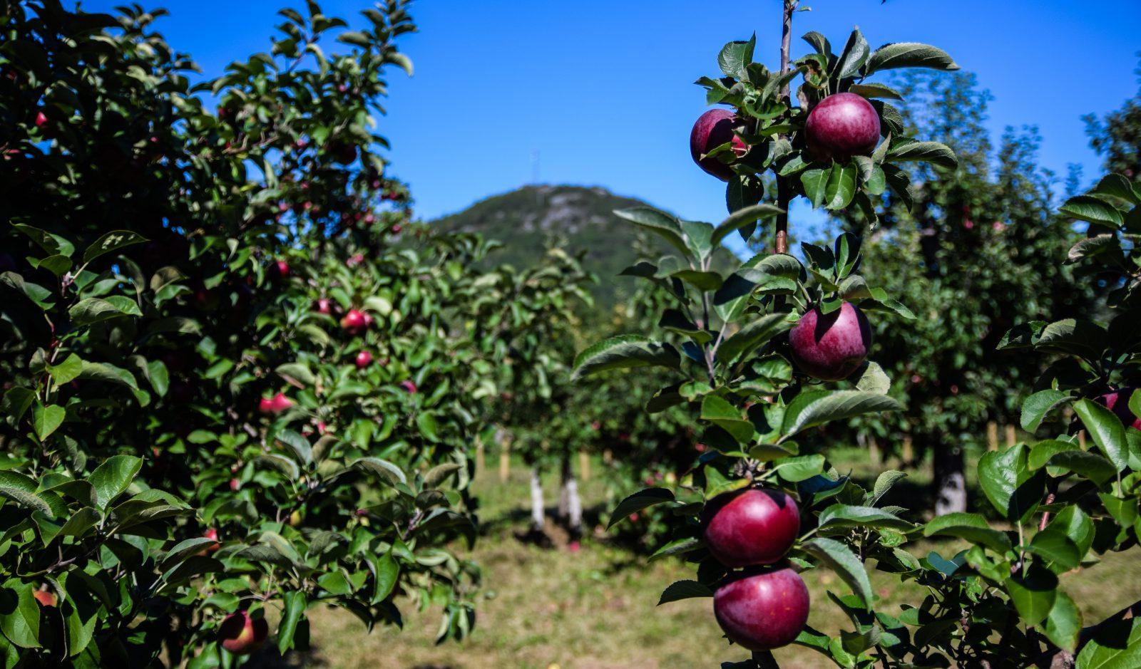 Une journée aux pommes avec le Parrainage civique