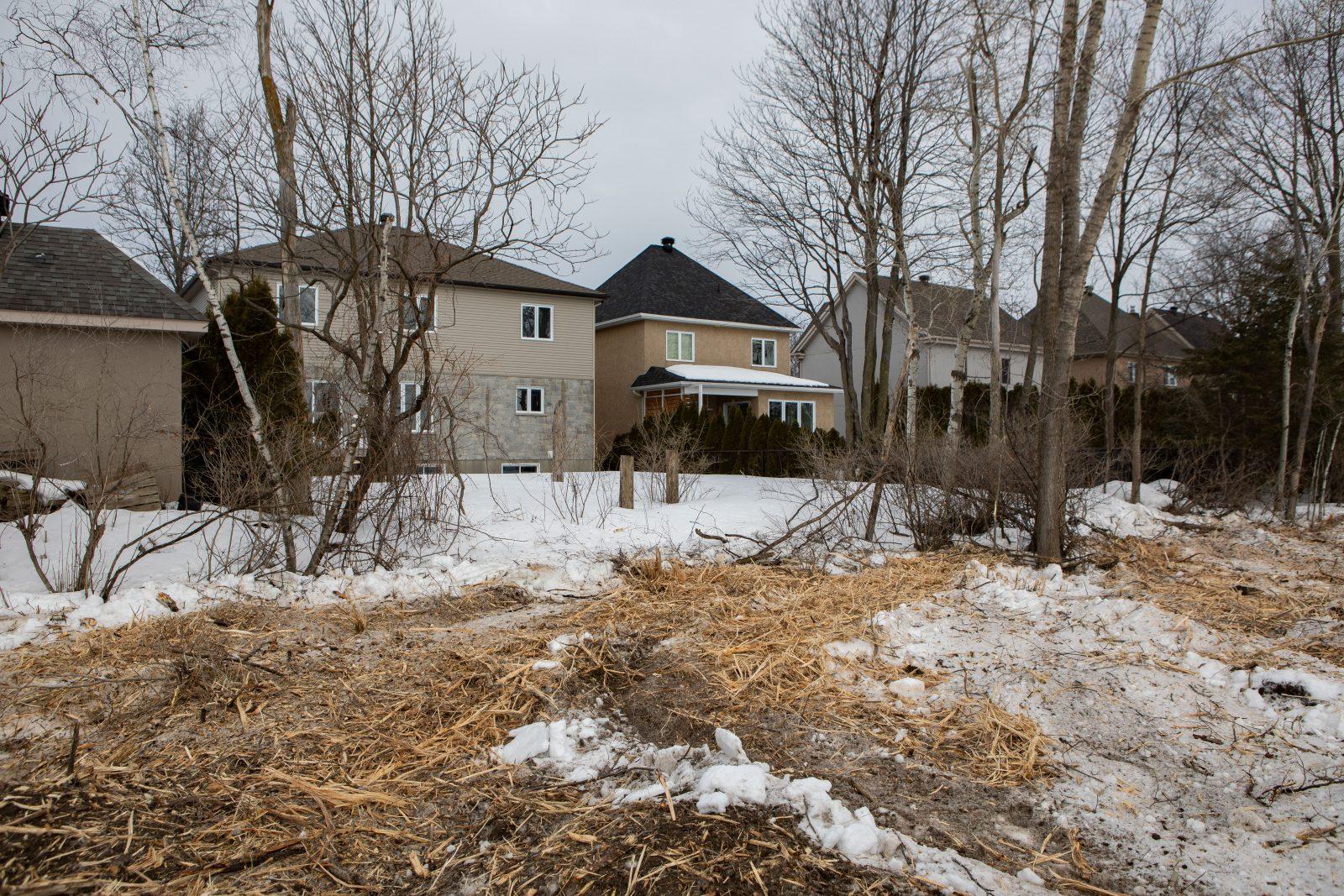 Arbres coupés et projet domiciliaire de 250 M$ en péril à Saint-Luc