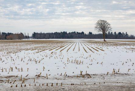 De plus en plus difficile d'acheter des terres agricoles