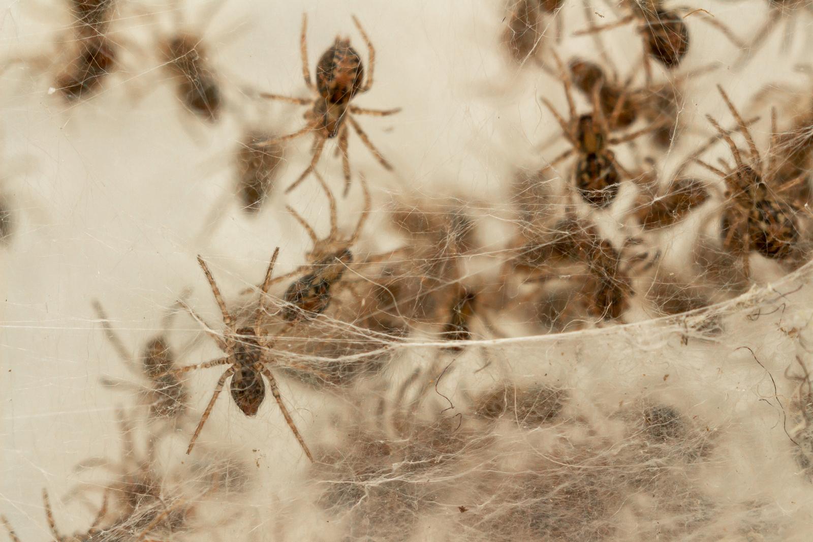 Extermination des araignées : la procédure complète