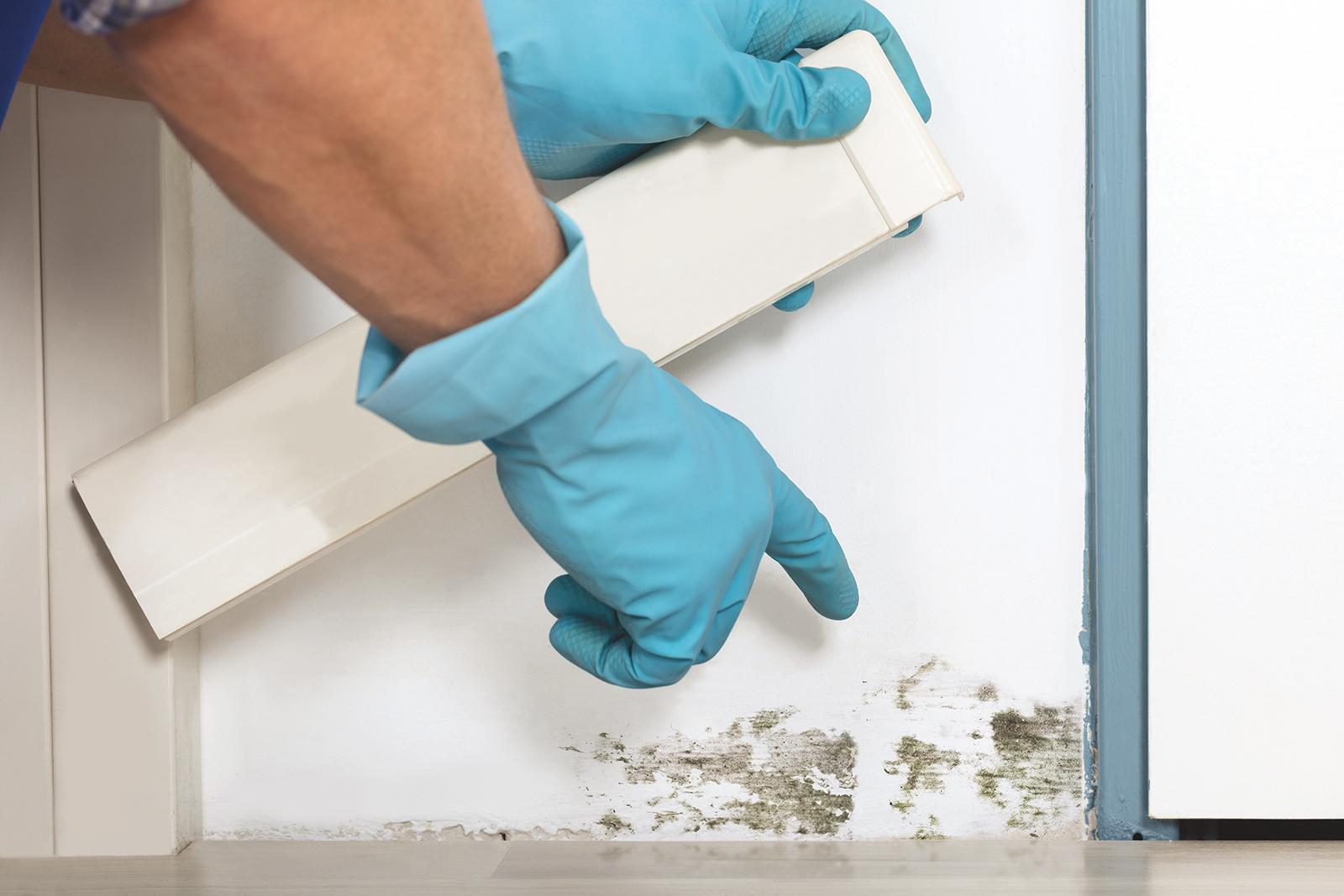 Comment se développent les moisissures dans la maison ?